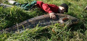 Wels angeln für Kinder Biofisch Südsteiermark Betriebsführungen