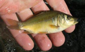 Biokarpfen Frischfisch Die Weiden Wien